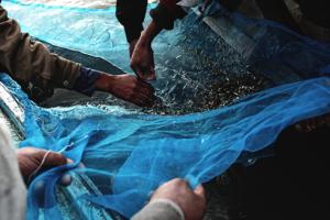 fisherman-hands