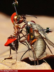 Insect-Battle-Painting---31254