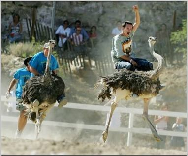 Ostrich Races - Arizona, Amazing Photos (1)