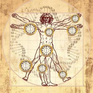 Biological_clock_and_the_Vitruvian_Man.pdf